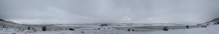 Torrubia nevada